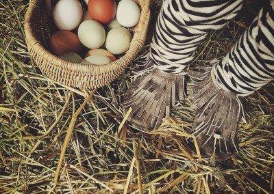 eggbasket2