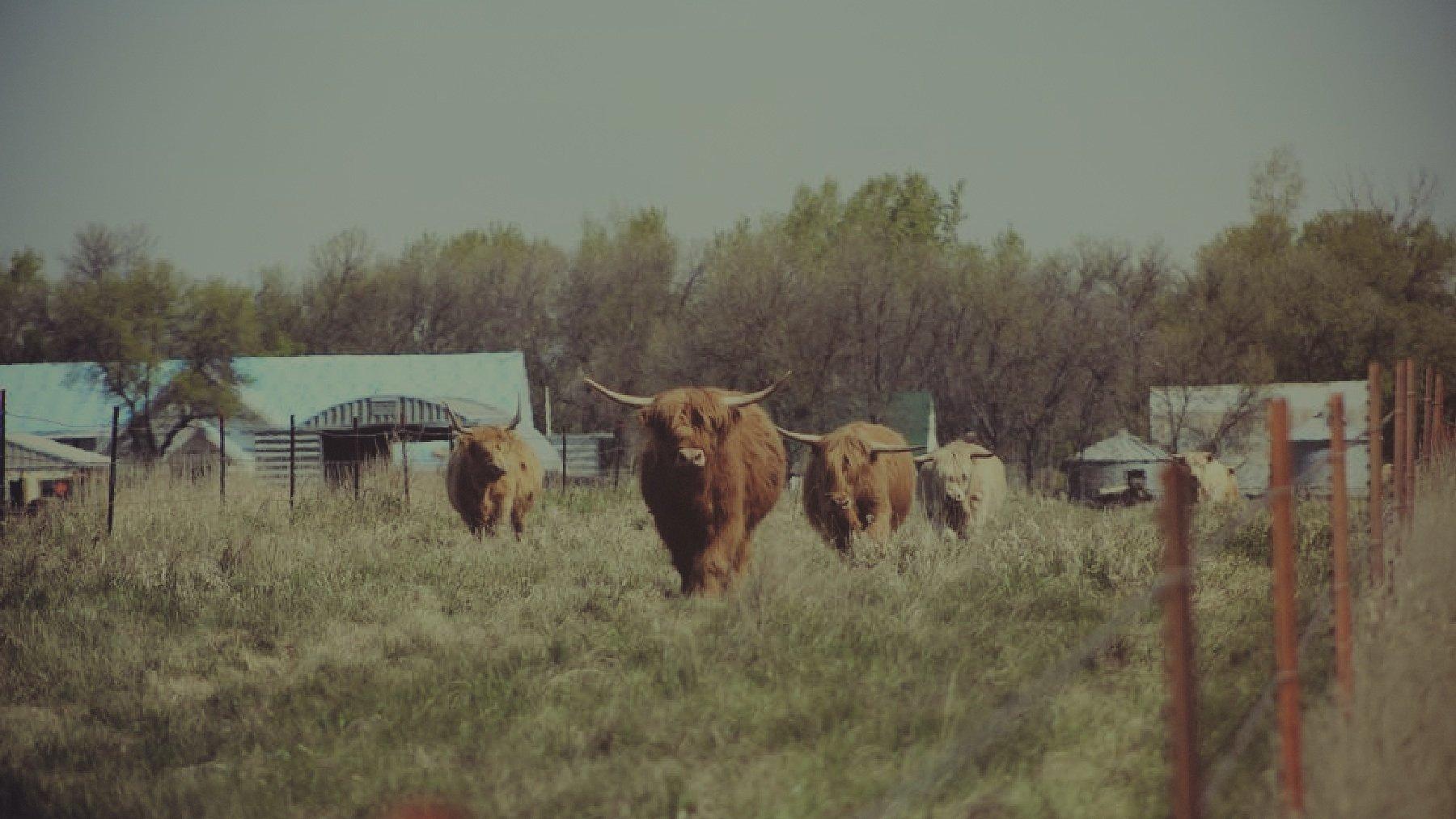 North Dakota Scottish Highlanders