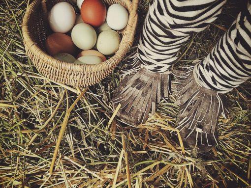 Bluestone Ranch Cage Free Eggs