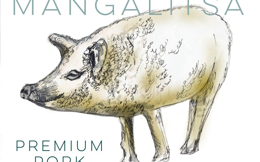 All About Bluestone Ranch Mangalitsa